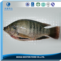 Wholesale Seafood Frozen 300-500 Gutted Scaled Whole Tilapia China