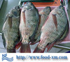 Fresh Water Fish tilapia fish price live tilapia