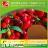 Manufacturer sales goji berry suppliers