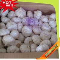 2014 Cheap Wholesale Prices!! Own Factory Production china agriculture wholesale offer best quality farm fresh natural garlic