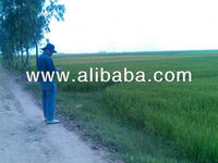 Agriculture Land Available for lease/sales in Cambodia
