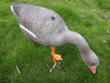 foldable goose decoy for hunting made by Xingyuan Industrial CO.Ltd. in China Guangdong