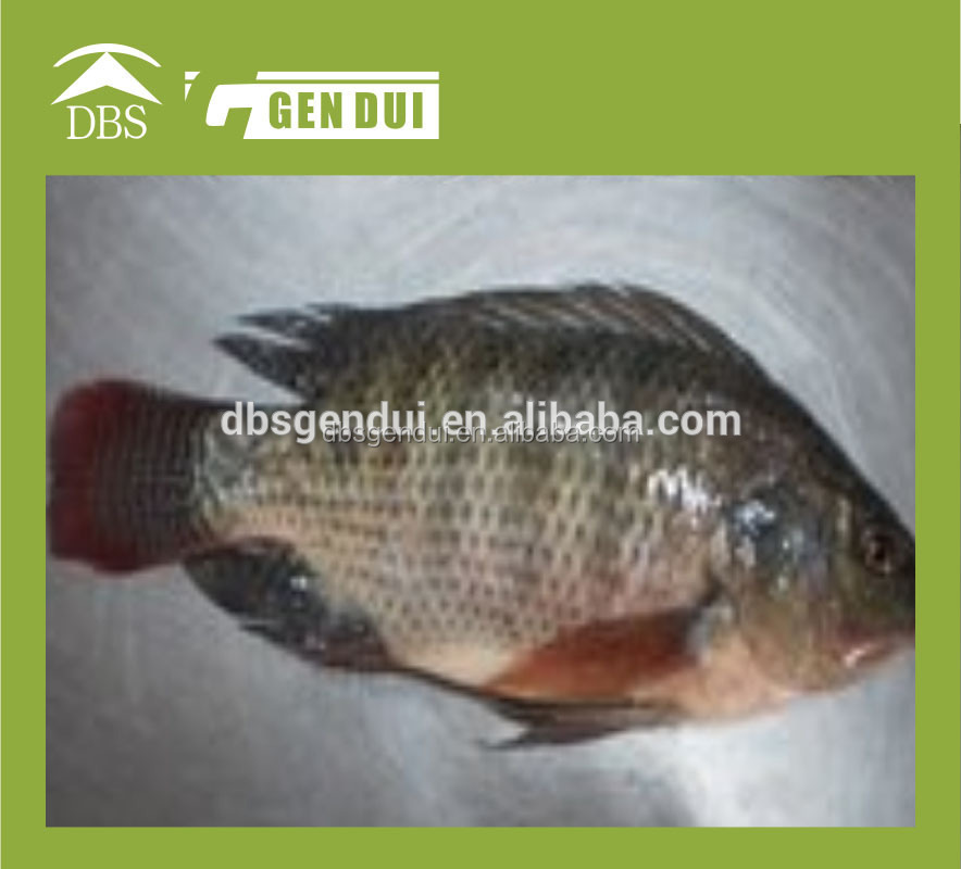 Fillet Price Fillets Wholesale Price