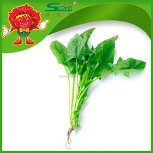 IQF whole leaf organic spinach