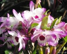 Food grade Dendrobium, is suitable for fitness enthusiast to get in shape and build muscle