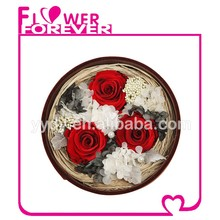 Best Selling Natural Preserved Flower