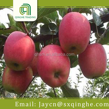bulk fresh fuji apple suppliers