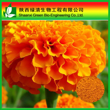 Herbal Extract! lutein marigold p.e.