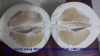 2015 new crop Honey Fresh Pomelo , fresh pomelo fruit for sale