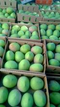 Fresh mango,Apple mangoes,Ngowe,Kent mango