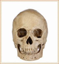 Mini Human Halloween Props Skull Human Resin Head Skull
