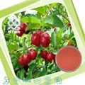 100% naturale indian ciliegia di estratti di frutta