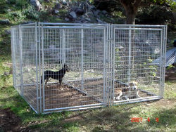 Stocked and Eco-friendly comfortable and customizable safe and strong galvanized steel cheap dog kennels