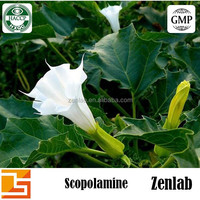 Natural Pure Scopolamine Powder 99% Scopolamine powder, Natural Scopolamine 99% in bulk