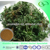 Natural Virgate Wormwood Herb extract