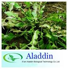 100% Natural Shepherdspurse Herb Extract