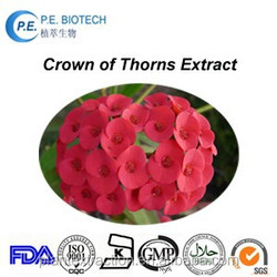 Natural Crown of thorns extract with high quality