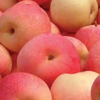 trend having good sense iranian fresh apple