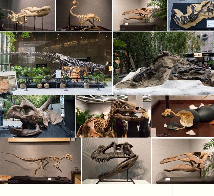 museum skeleton exhibition.jpg