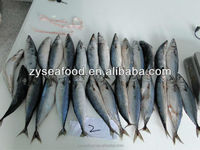 Frozen Saba Mackerel Fish