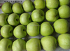 green gala cheap fresh apple fruit for sale at good price