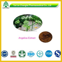 GMP Certificated Wild Herb Nature Pure Chinese Dong Quai Angelica Extract Powder