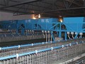 Herramientas de la granja y nombres automático gallinero aves de corral de alimentación del sistema para la venta