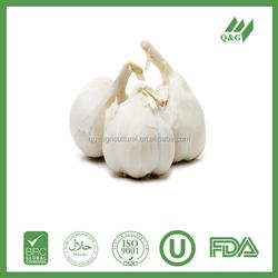 fresh garlic from chinese farmer