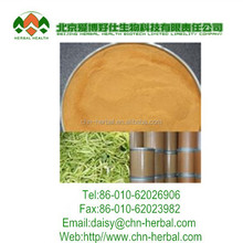 High Quality Witch Hazel Extract Powder