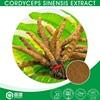Pure Natural Healthcare Mycelia Cordyceps Sinensis Extract,Cordyceps Sinensis Polysaccharide