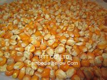 Cambodia Yellow Corn