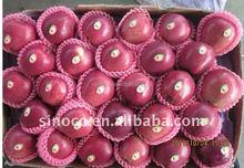 Red Delicious Apple 2015 crop