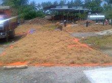 Indonesia Coconut Fibre