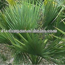high quality saw palmetto extract 25% 45%