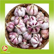 china garlic harvester supply wholesale low price frozen garlic cloves