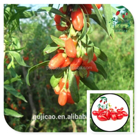 2015 China Natural Red Goji Berry Customized Package