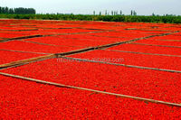 ZhongNing frozen red goji berry with lowest price