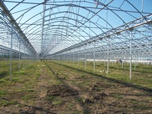 hydroponics greenhouse for tomatoes lettuce