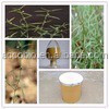 GMP standard Spreading Hedyotis Herb Extract,Best price Spreading Hedyotis Herb Extract powder