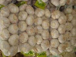 China export 2015 fresh white garlic price