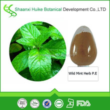 Factory Bulk Supply Wild Mint Herb P.E.