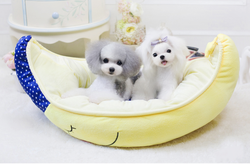 Lovable Moon Shape Sofa Beds Pet Bed Luxury Dog Bed Pet Products Wholesale New Products 2015 Innovative Product