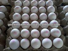 blanco fresco de <span class=keywords><strong>huevos</strong></span> con cáscara