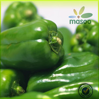 2014 fresh green bell pepper/green pepper for hot sale