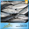 2015 Best Sale Frozen Sarda Sell Fresh Tuna Fish