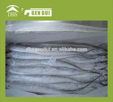 frozen hairtail price for frozen fish price for frozen fish