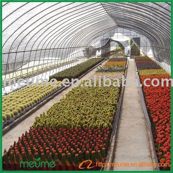 mini jardim de cactus:Grafted Cactus and Succulent Plants