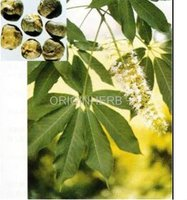 100% Natural High Quality Black Cohosh Extract Powder
