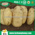2013 China holanda patata fresca
