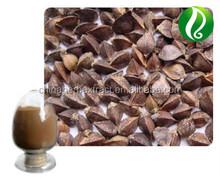 high quality Tartary Buckwheat Extract